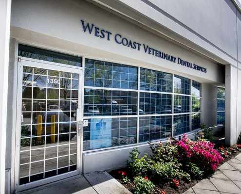 WCVDS   West Coast Veterinary Dental Services